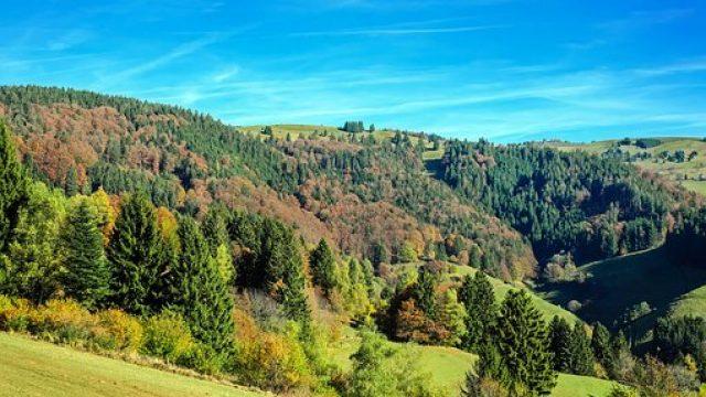 4 Tage Schwarzwaldidylle