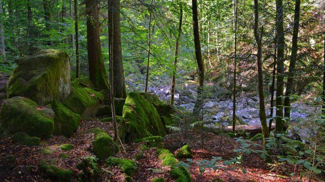 4 Tage Bayerischer Wald