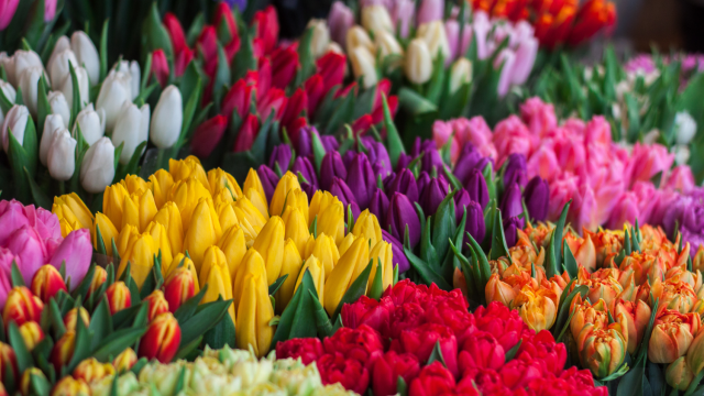 Blumenmarkt Groningen