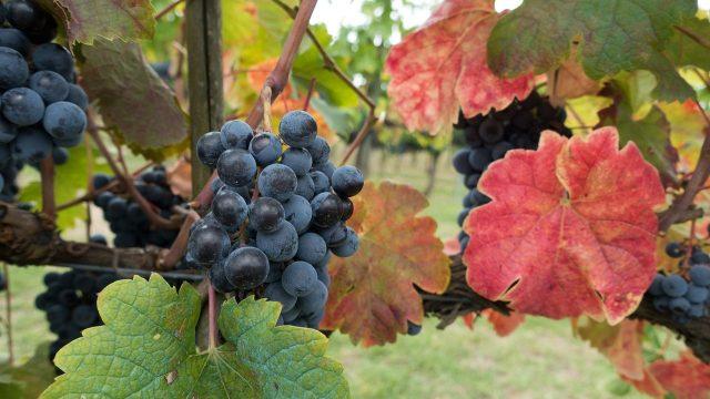3 Tage Weinfest/Weinkerve in Abenheim